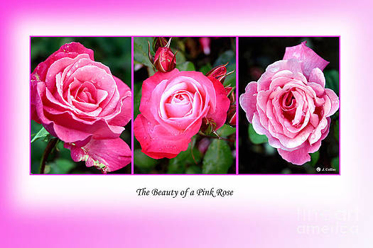 Pretty in Pink Roses by Jo Collins