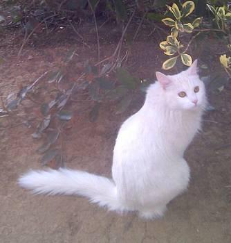 Pretty Kitty by Carole Joyce
