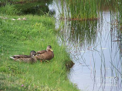 Mated Pair of Ducks by Eunice Miller