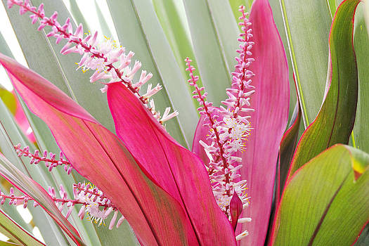 Simply  Photos - Pretty Pink in Key West