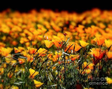 Patrick Witz - Pretty Poppies