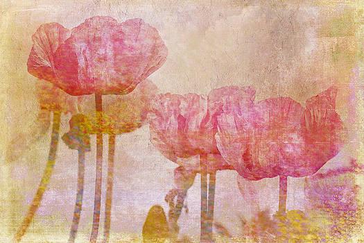 Peggy Collins - Pretty Poppy Garden