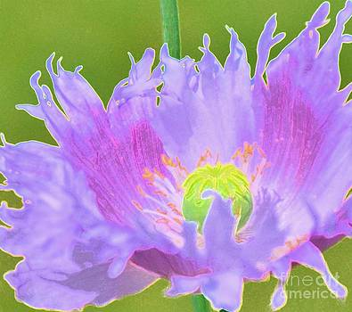 Pretty Poppy by Kathleen Struckle