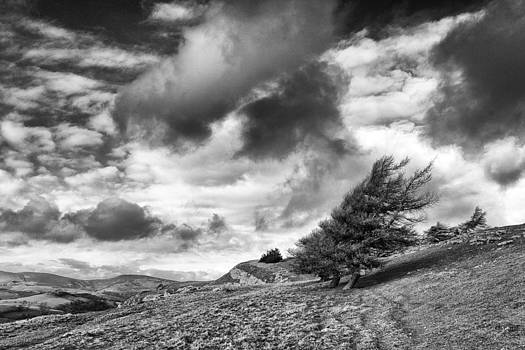 Prevailing wind by Carlton Boyce