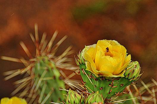 Prickly Bloom by Diana Cannon