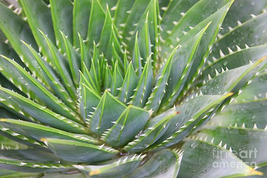 Prickly Green by Fir Mamat