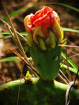 Prickly Pear Bud by Lisa Waggoner