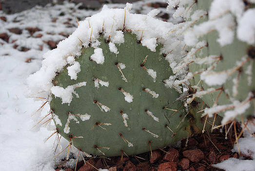 Prickly Pear in Snow by Curtis Jones