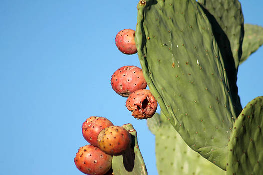 Prickly Pear by Kathleen Nash