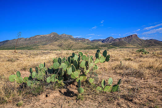 Prickly Pear Morning by Beverly Parks