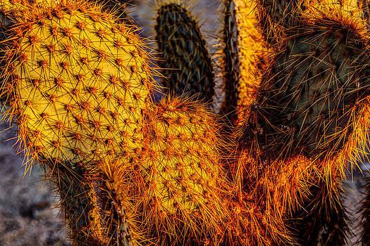 Prickly Pear Sunrise by James Marvin Phelps