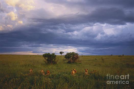 Art Wolfe - Pride Of Lions