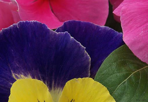 Primary Petals by Greg Taylor