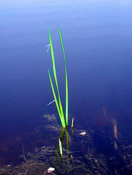 Primordial Swamp Grass by David Schneider