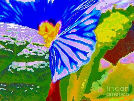 Primula stripes by Dana Hermanova