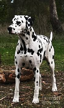 Prince of a Dog by Blair Stuart