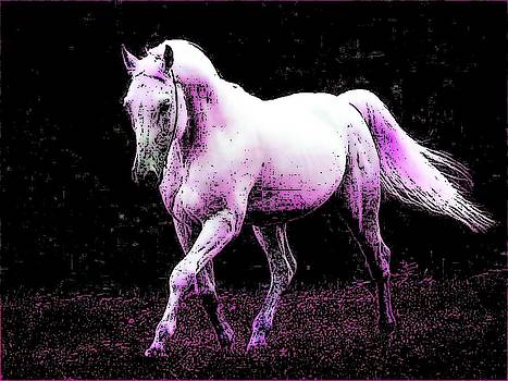 Prince of Horses by Kathy Budd