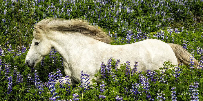 Prince of the Lupine by Joan Davis