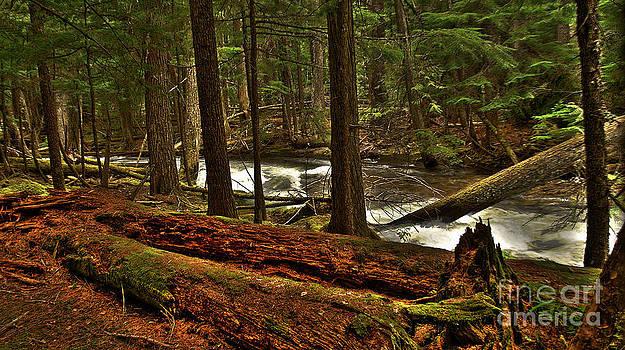 Pristine Forest by Sam Rosen