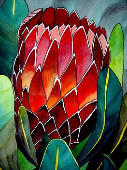 Protea by Sacha Grossel