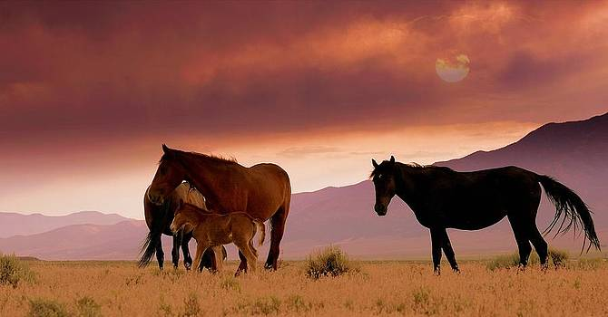 Protecting The Foal  by Jeanne  Bencich-Nations