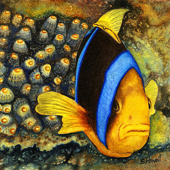 Protective Clown Fish by Sandi Howell