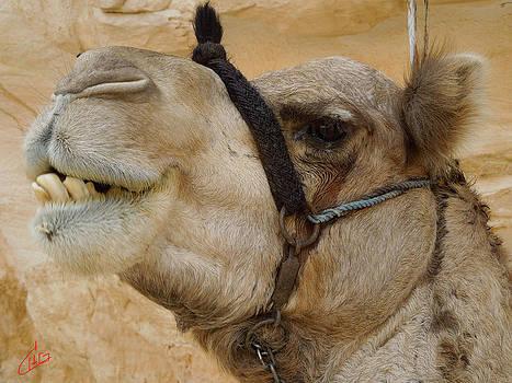 Colette V Hera  Guggenheim  - Proud Bou Bou Camel Sinai Egypt