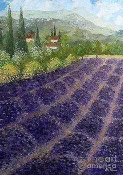 Provence Lavender Fields  by Amalia Suruceanu