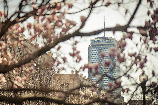 Pru Blossom by Andrew Kubica