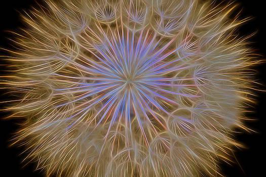 James BO  Insogna - Psychedelic Dandelion Art
