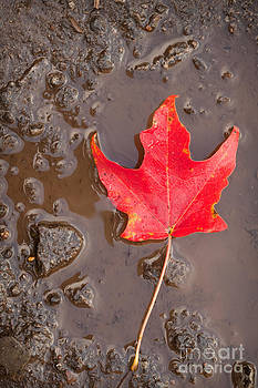 Puddle Leaf by Sharon Dominick