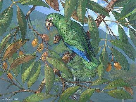 Puerto Rican Amazon by ACE Coinage painting by Michael Rothman