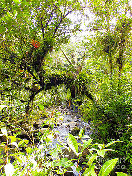 Puerto Rican Rainforest with Creek 2 by G Matthew Laughton