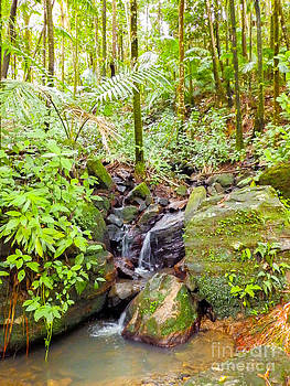 Puerto Rican Rainforest with Creek by G Matthew Laughton