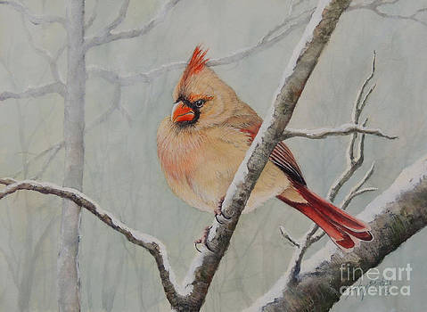 Puffed up for Winters Wind by Sandy Brindle