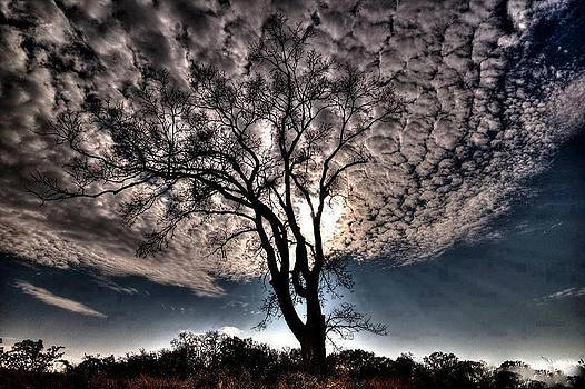 Puffy Clouds by Janet Moss