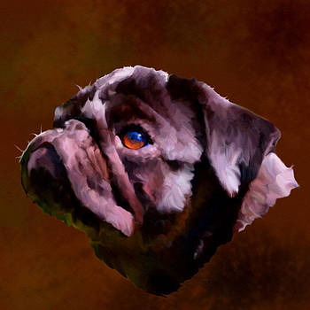 Bamalam  Photography - Pug