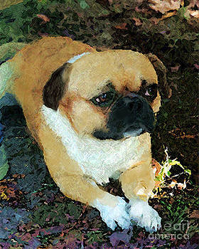 Pug by Margie Middleton