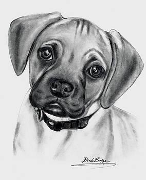 Barb Baker - Puggle Pup