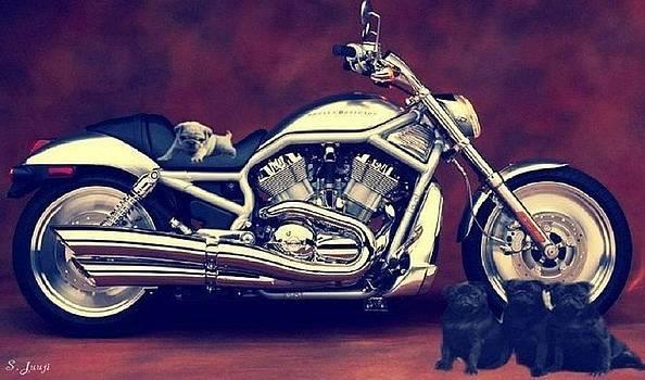 Pugs Born To Ride by Shaunna Juuti