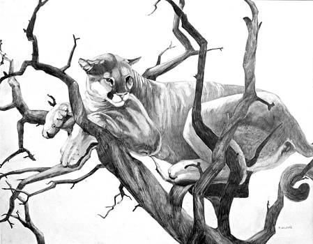 Puma in Graphite by Tyler Willmore