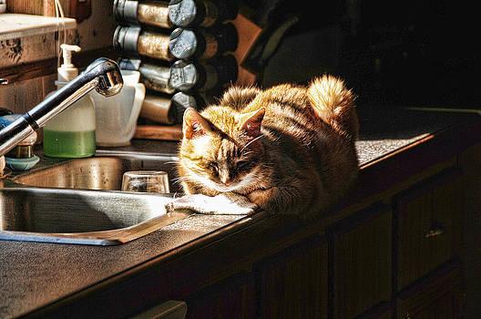 Pum'kins Sunbeam by Jody Lovejoy