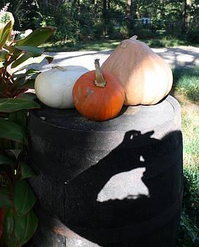 Pumpkin and Photographer by Bernadette Amedee