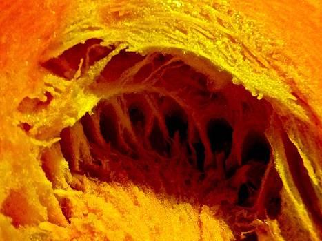 Marc Philippe Joly - Pumpkin cave