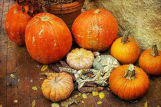Pumpkin Delight by Joan Bertucci