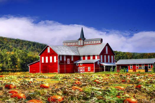 Pumpkin Farm by David Simons