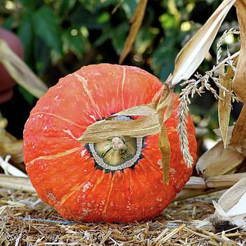 Art Block Collections - Pumpkin Harvest