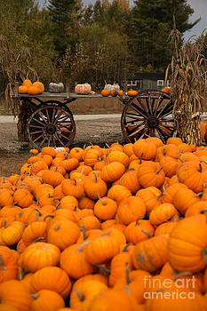 Pumpkin Harvest by Brenda Giasson