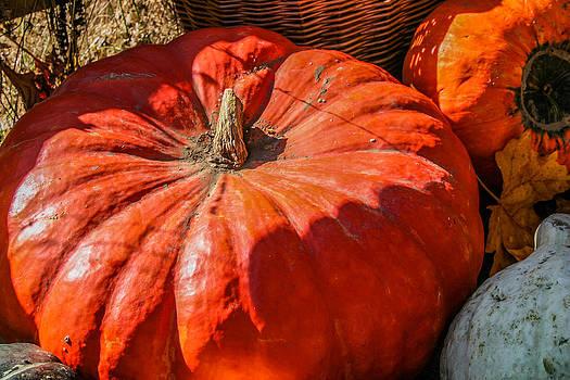 Pumpkin Harvest by Pandyce McCluer