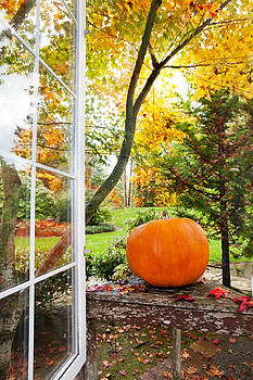 Jo Ann Snover - Pumpkin in garden